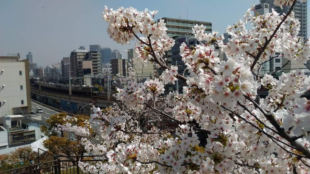 桜と電車とサンドイッチ